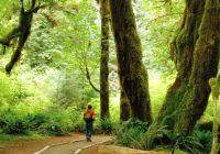 man-in-woods